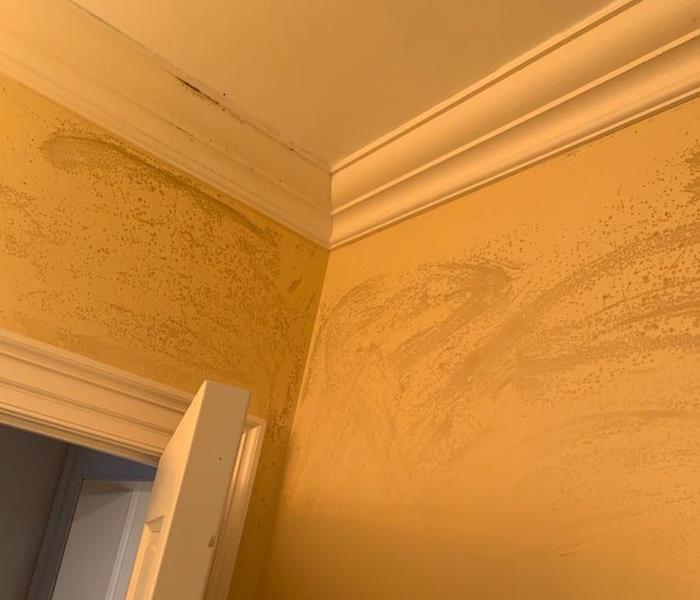 Ceiling and walls with mold damage