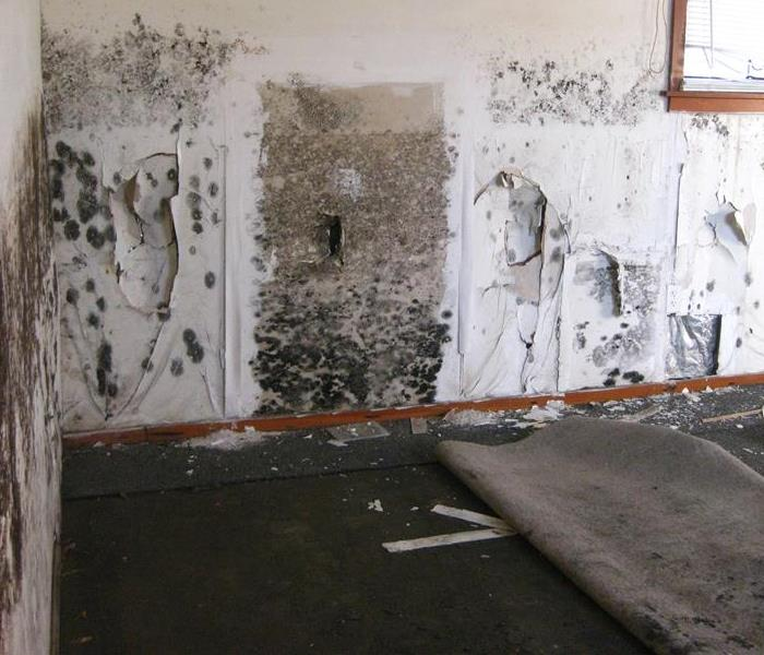 We Do Mold Remediation Like No One Else!