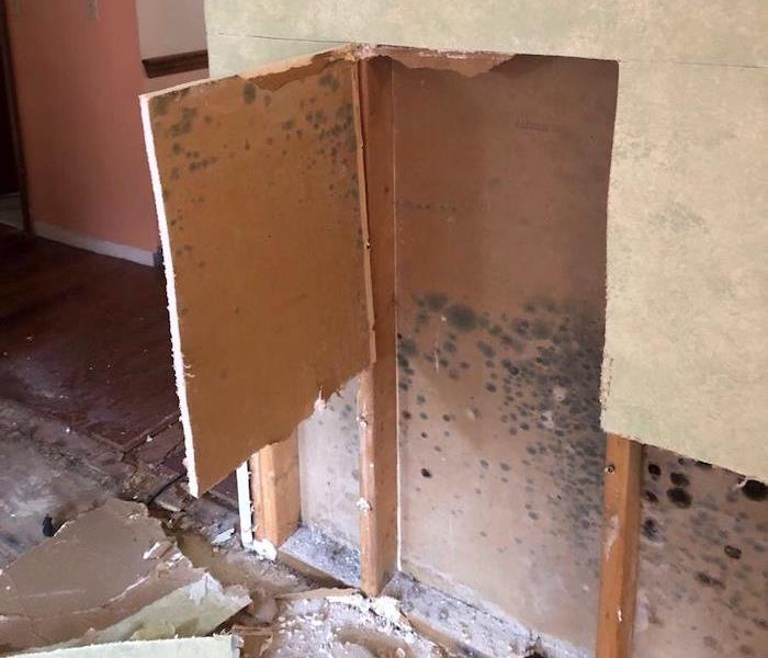 Wall with mold damage with cut away sheetrock