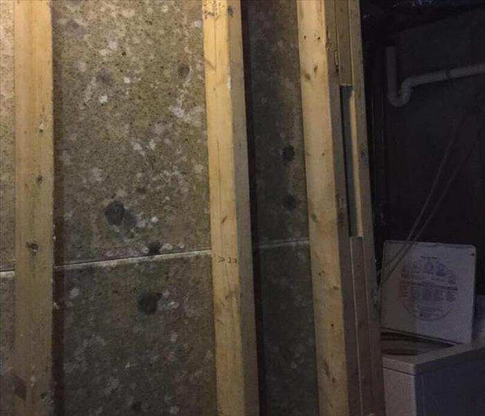 Mold Remediation Effective Ways to Handle Mold Issues in Residential and Commercial Properties