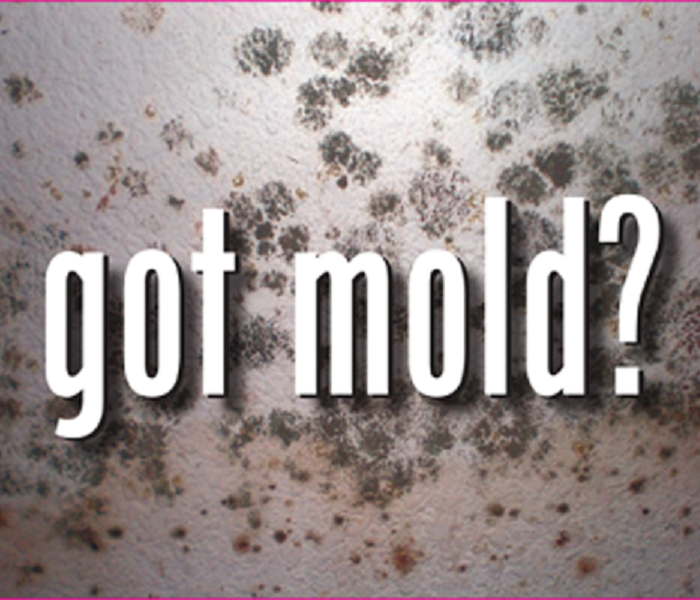 Sandwich, MA Mold Removal And Mold Remediation