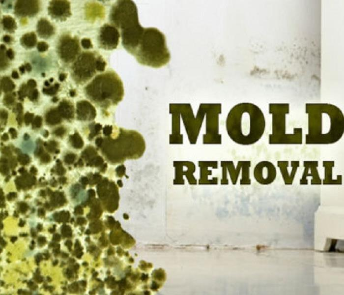 Mold Remediation Got Mold?  The Do's & Do Not's Of Mold Remediation.