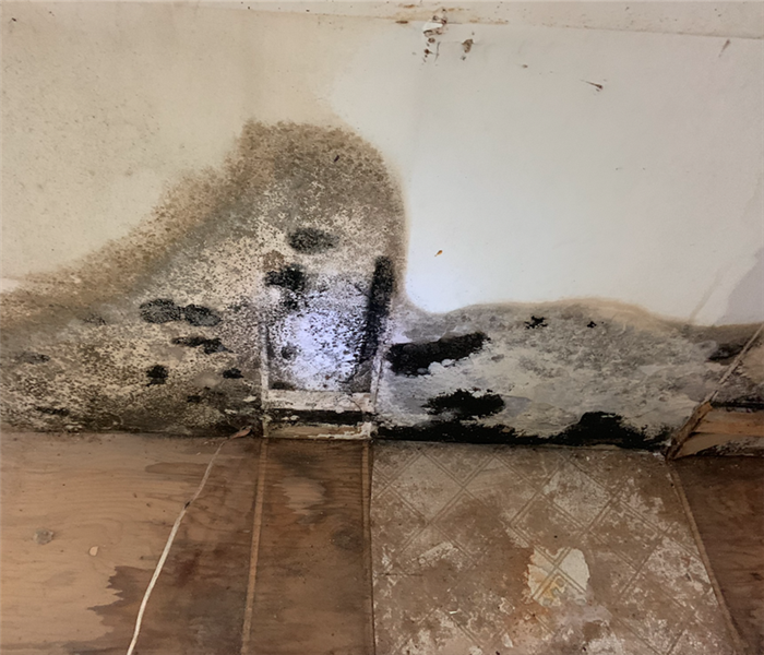 black mold in living room
